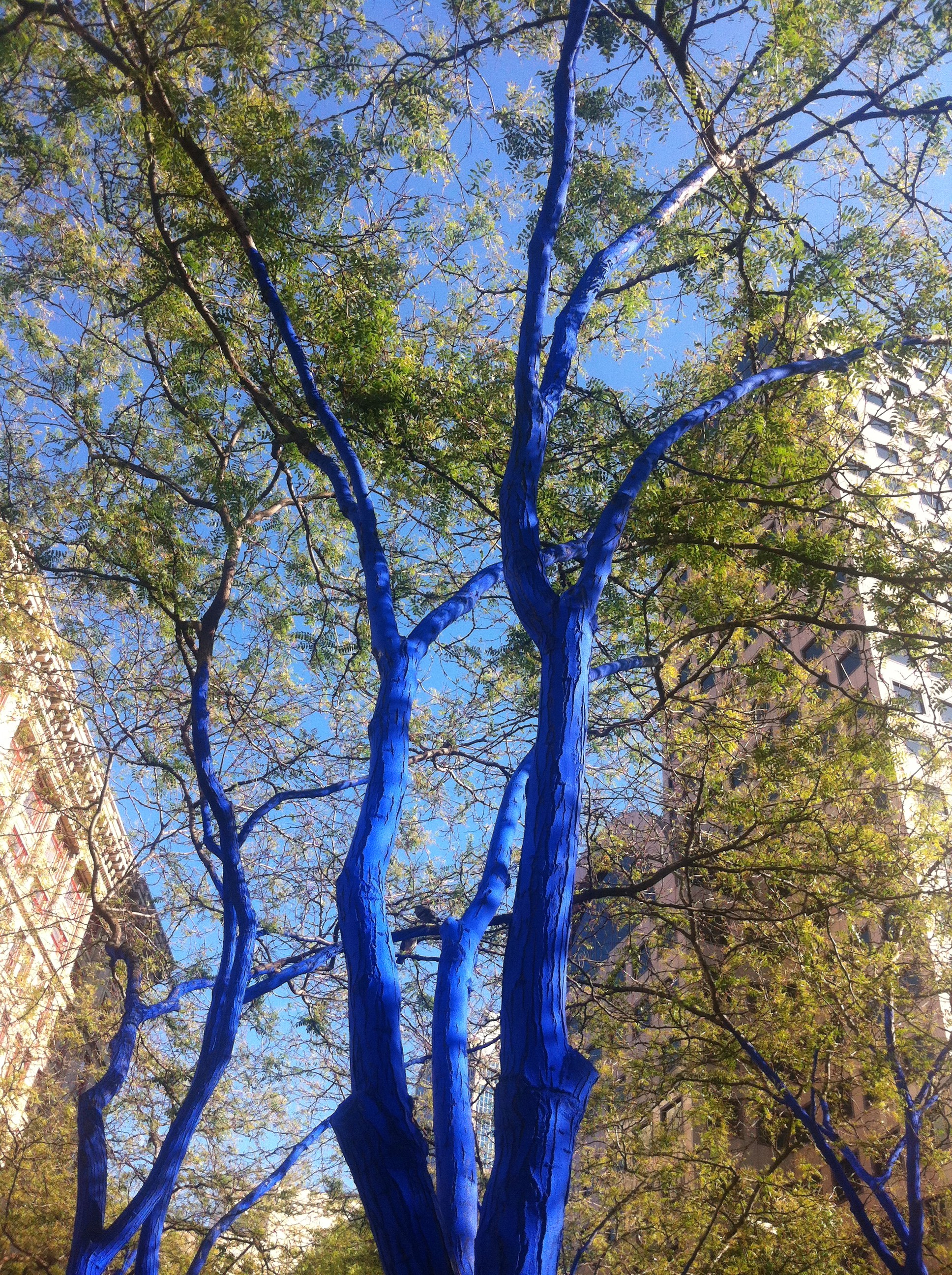 Nature In Cities The Weird Trees Of Seattle Through The
