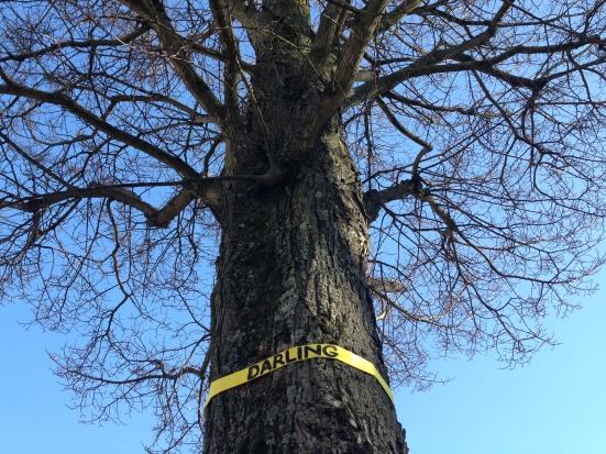 "treehuggers - ribbon saying ""darling"" on tree"
